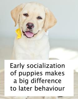 Early Socialization